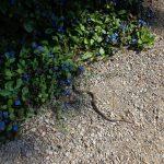 Die Schlange vom Kurpark Baden