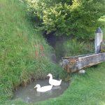 Spaß am Entenbrunnen