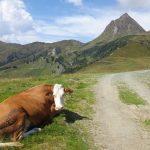 Die Kuh und der Große Rettenstein