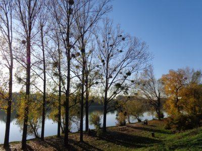 Donauufer in der Lobau