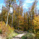 Stadtwanderweg im Schottenwald