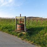 Weinpresse bei Guntramsdorf