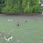 Wildtiere im Naturpark Sparbach