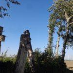 Baumstumpf am Rußbach