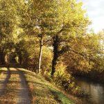 Herbst am Marchfeldkanal