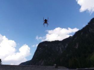 Die Spinne vom Berg