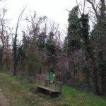 Waldstück bei Helmahof