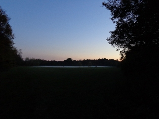 Abendnebel in der Lobau