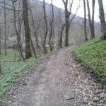 Bärlauch am Kolbeterberg