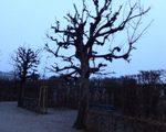 Im Belvedere Park