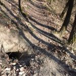 Fuchsbau im Hochleithenwald