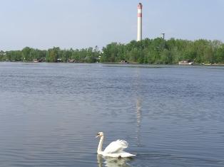 Schwan vor dem Dampfkraftwerk