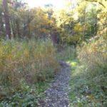 Spazierweg zum Grünhaufen