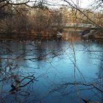 Vögel am winterlichen Heustadlwasser