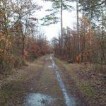 Feuchte Wege im Silberwald