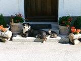 Hund und Katz in Unterberg