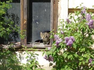 Die Katze von Seyring