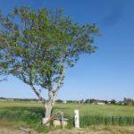 Baum bei Markgrafneusiedl