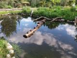 Schildkröten am Baumstamm