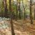 Im Schottenwald