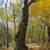 Baum im Schottenwald