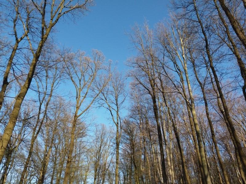 Baumkronen im Lainzer Tiergarten