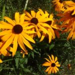Blumen am Biotop