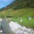Weide am Tuxbach