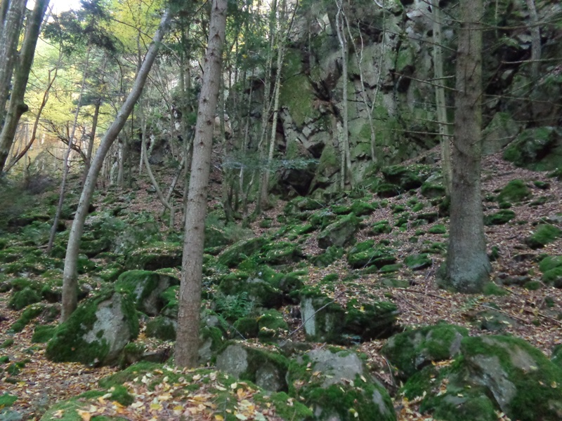 Felsen in der Steinbachklamm