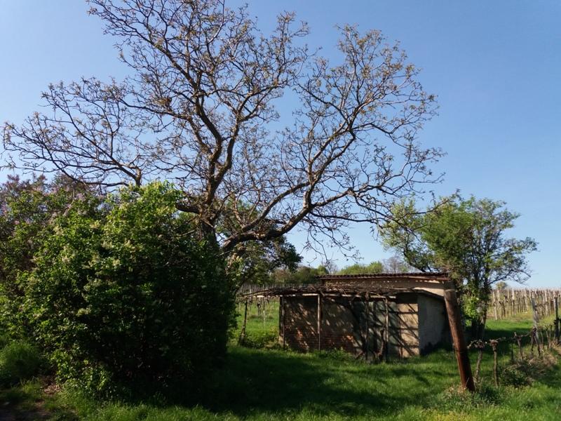 Garten bei Stammersdorf