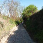 Hohlweg am Kallusweg