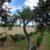 Obstbäume in Jedenspeigen