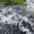 Quellwasser am Blausee