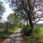 Radweg in der Lobau