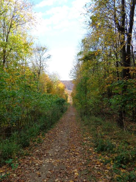 Wandern im Schottenwald