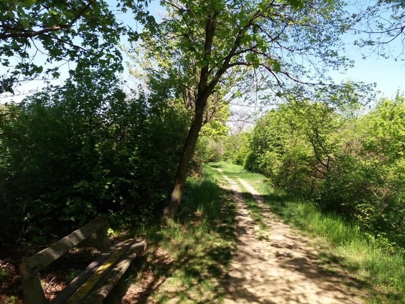 Wanderweg am Bisamberg