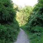 Weg zum Schwarzenbergpark