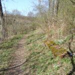 Wolkersdorfer Walderlebnispfad