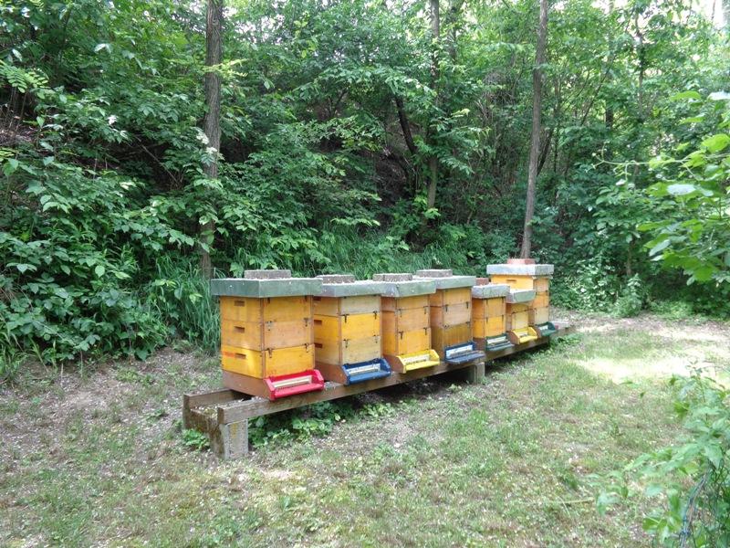 Bienenstöcke an der Kirschenallee