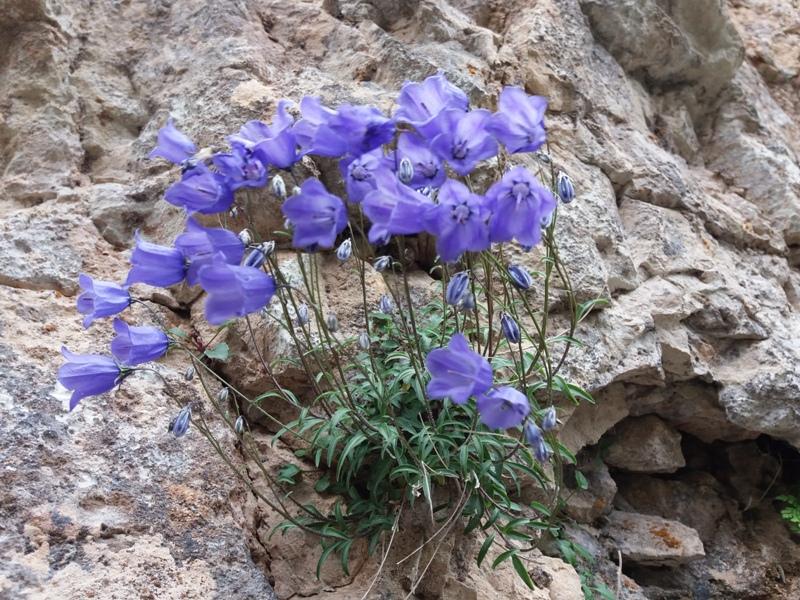 Blumen am Fels