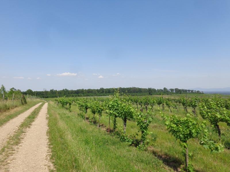 Feldweg im Weinviertel