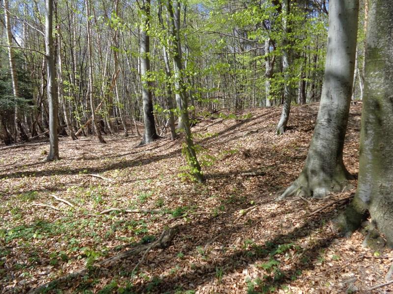 Römerzeitliche Hügelgräber