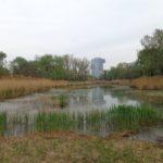 Teich im Donaupark