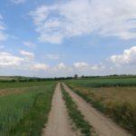 Feldweg bei Großengersdorf