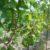 Wein bei Thallern