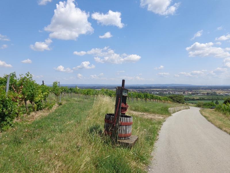 Weinpresse bei Thallern