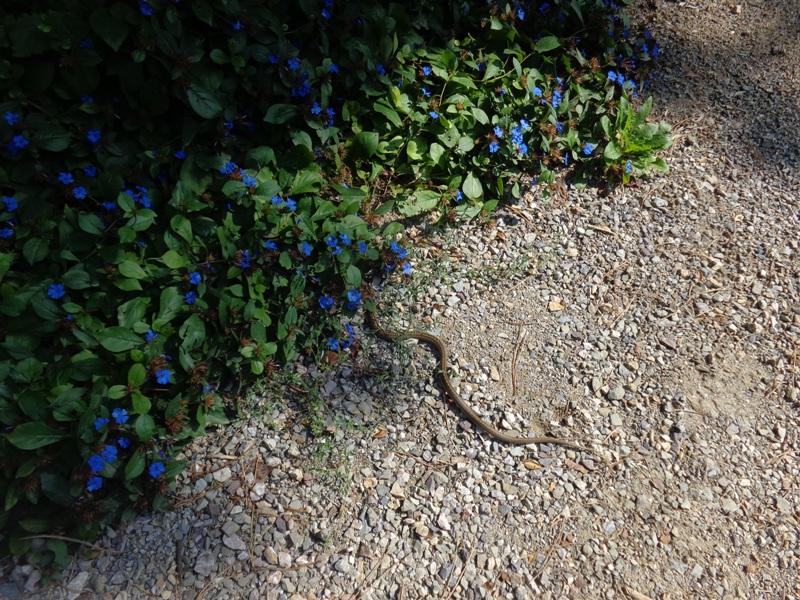 Die Schlange vom Kurpark