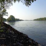 Donauufer bei Mannswörth