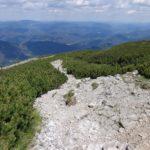 Latschen am Schneeberg