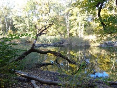 Holz im Wasser